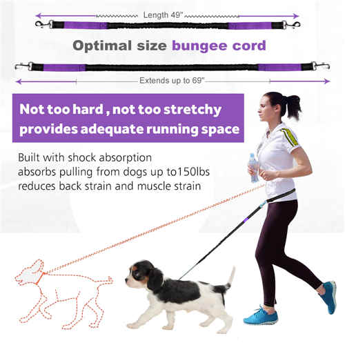 Hands Free Dog Leash for Running Walking Training Hiking, Dual-Handle Shock Absorbing Reflective Bungee, Adjustable Waist Belt and Pouch, Ideal for Medium to Large Dogs (Black /Purple)